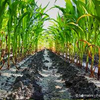 No agli OGM