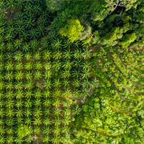 Olio di palma ed ecologia